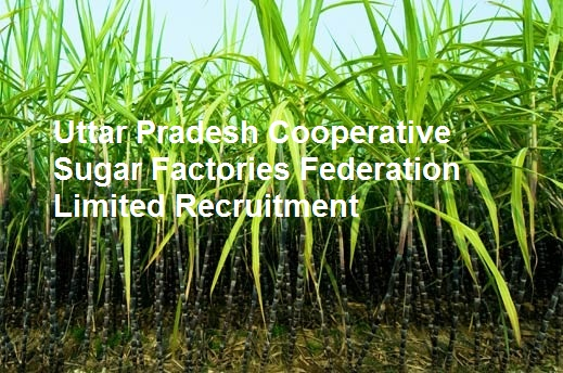 "co operative sugar mills limited salem Declaration i here by declare that this project report entitled"" a study on fringe benefits provided by the salem co-operative sugar mills ltd, mohanur"" under."